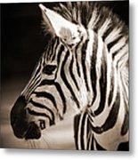 Portrait Of A Young Zebra Metal Print