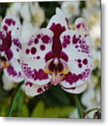 Portrait Of An Orchid Metal Print