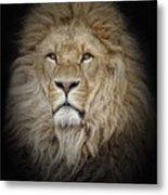 Portrait Of Lion Against Black Metal Print