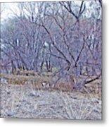 Prescott Arizona Watson Lake Bayou Trees Scrub Water Grasses 3142019 4916 Metal Print