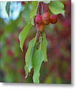 Pretty Cherries Hanging From Tree Metal Print