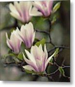 Pretty White And Pink Magnolia Metal Print
