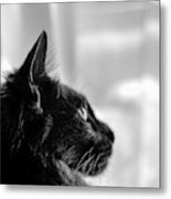 Profile Of A Long Haired Cat In Window Metal Print