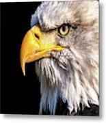 Profile Of Bald Eagle Metal Print