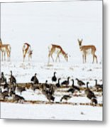 Pronghorn Antelope And Geese Metal Print