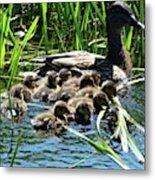 Proud Mother Duck Metal Print