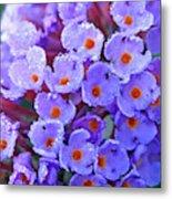 Purple Flowers In The Morning Dew Metal Print