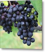 Purple Grape Bunches 20 Metal Print