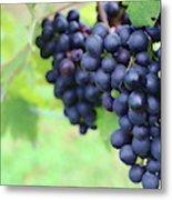Purple Grape Bunches 21 Metal Print