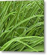 Raindrops Of Daylily Foliage Metal Print
