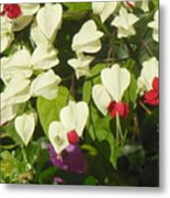 Red And White Surprise 2 Metal Print