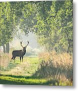 Red Deer In The Forest Metal Print