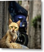 Red Cat With Green Eyes Metal Print