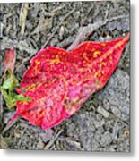 Red Leaf On Green's Hill Metal Print