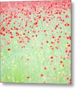 Red Poppies In A Meadow Metal Print