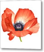 Red Poppy Flower, Image For Prints On Tshirt Metal Print