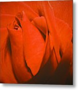 Red Rose Special Metal Print
