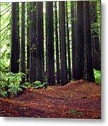 Redwoods 1 Metal Print