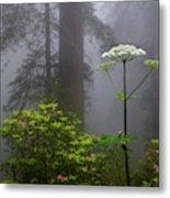 Redwoods By Crescent City 1 Metal Print