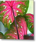 Reflections On The Calming Of Pink Metal Print
