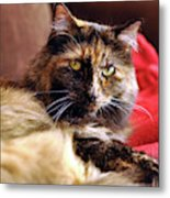 Regal Feline Metal Print