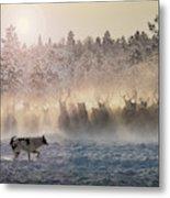 Reindeers - North Of Russia Metal Print
