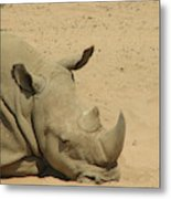 Resting Rhinoceros With His Head Down In A Sandy Area Metal Print