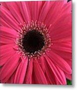 Rhapsody In Pink - Gerbera Daisy Metal Print