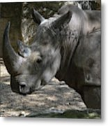Rhino Standing In The Shade On A Summer Day Metal Print