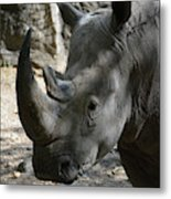 Rhinoceros With Two Horns Up Close And Personal Metal Print