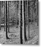 Road Passing Through Forest, Stuttgart Metal Print