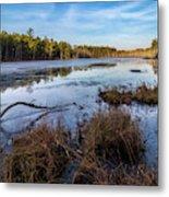 Roberts Branch Pine Lands Metal Print