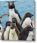 Rockhopper Penguin And Chicks Metal Print