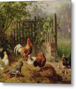 Rooster With Hens And Chicks Metal Print