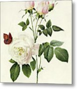 Rosa Bengale The Hymenes By Redoute Metal Print