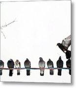 Row Of Pigeons On Wire Metal Print