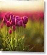 Rows Of Magenta Painterly Tulips Metal Print
