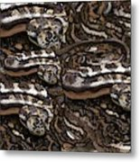 S Is For Snakes Metal Print