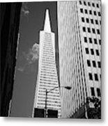 San Francisco - Transamerica Pyramid Bw Metal Print