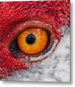 Sandhill Crane Eye Metal Print