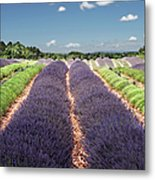 Scent Of Lavender Of Provence Metal Print