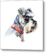 Schnauzer. Portrait Of A Dog. Set With Metal Print