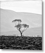 Scottish Highland Tree In Black And White Metal Print