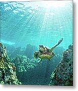 Sea Turtle Coral Reef Metal Print