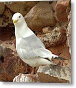 Seagull On Rock Metal Print