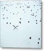 Seagulls And Ducks At Lake Constance Metal Print