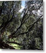 Secular Tree Metal Print