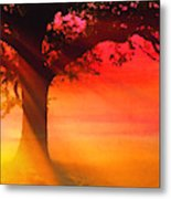 Shade Tree At Dawn Metal Print