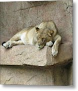She Lion Metal Print