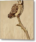 Short Eared Owl Perched On A Branch Metal Print